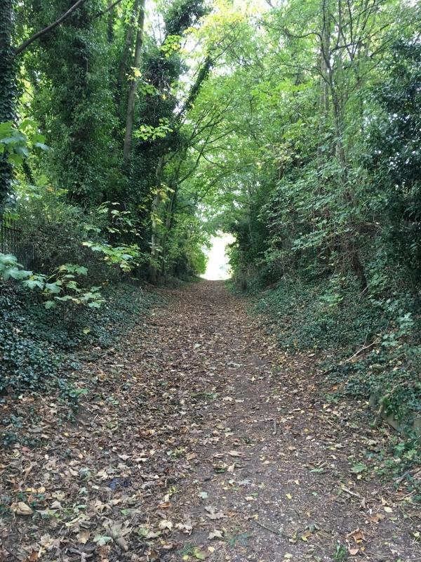 Mind clearing woodland walk