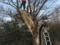 5/5 Tree Climb Geocache